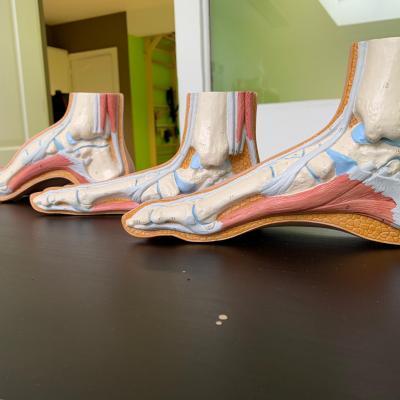 voetmodellen